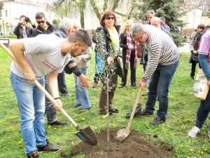 Pobratimljenje Porecani i Kikindjani posadili maslinu drvo mira i prijateljstva